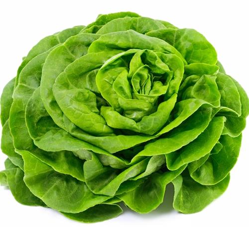 Lettuce During Pregnancy