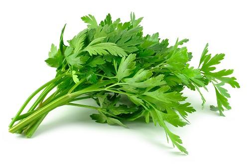 parsley during pregnancy