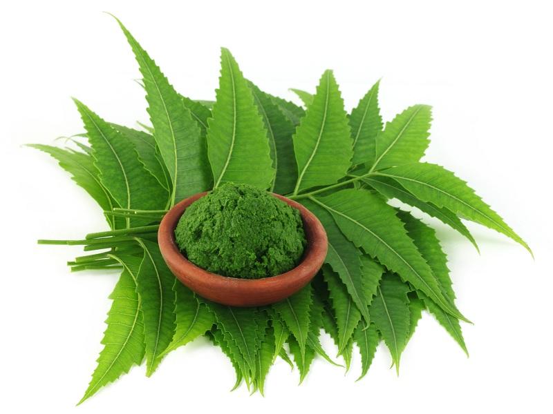 neem powder benefits