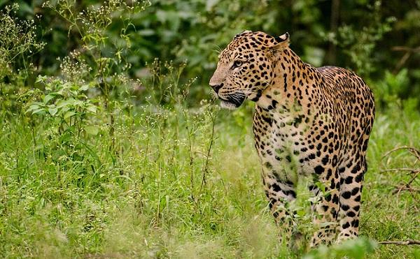 parks-in-haryana-kalesar-national-park