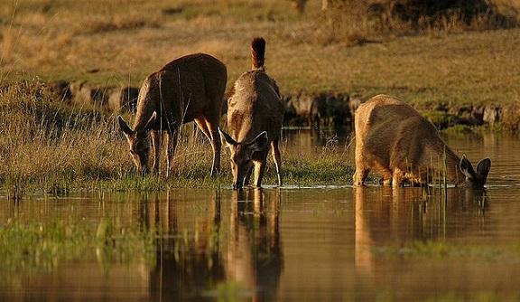 parks-in-madhya-pradesh-pench-national-park