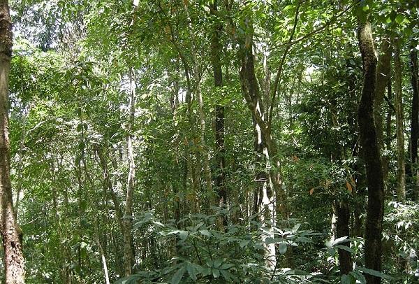 parks-in-mizoram-dampa-tiger-reserve