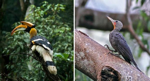 parks-in-mizoram-ngengpui-wildlife-sanctuary
