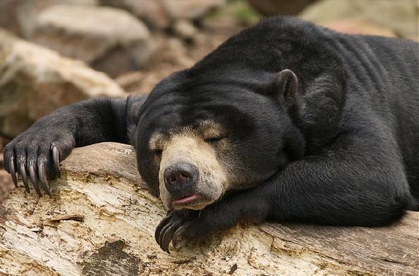 parks in mizoram Mini Zoological Garden sun bear