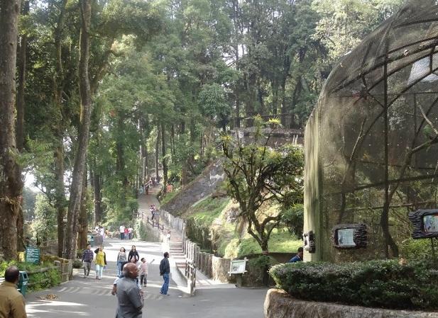 padmaja-naidu-himalayan-zoological-park_darjeeling-tourist-places