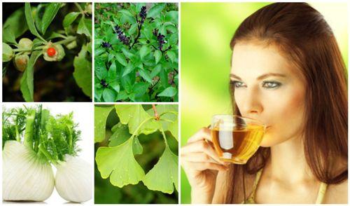 Top 9 Effective Energy Boosting Herbs