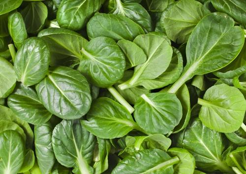 Green Leafy Vegetables 4