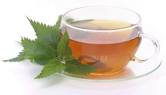 Tee Brennessel - tea nettle 03