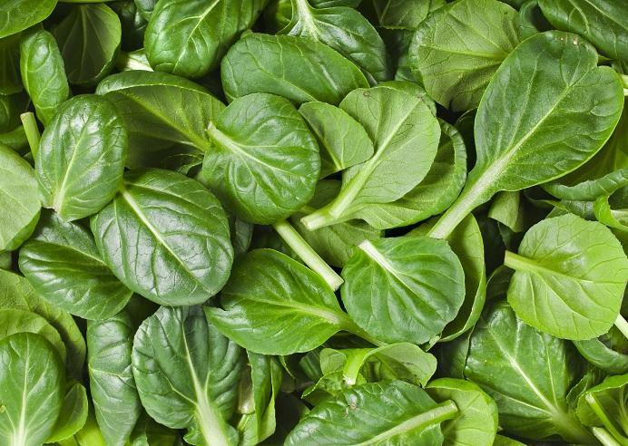 foods that contain vitamin e